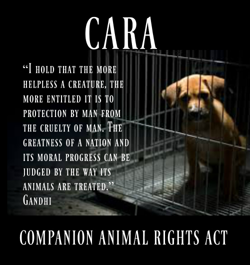 Would you support a Federal Companion Animal Rights Act?